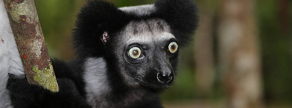 Lemurie Land