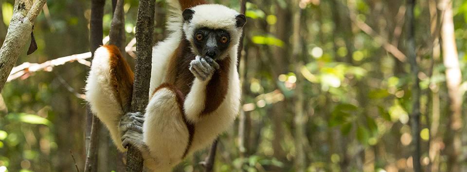 Inselparadies im Osten Madagaskars