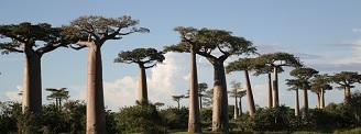 Expedition durch das Baobabland