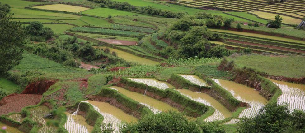 kunstvoll angelegte Reisterassen im Hochland Madagaskars