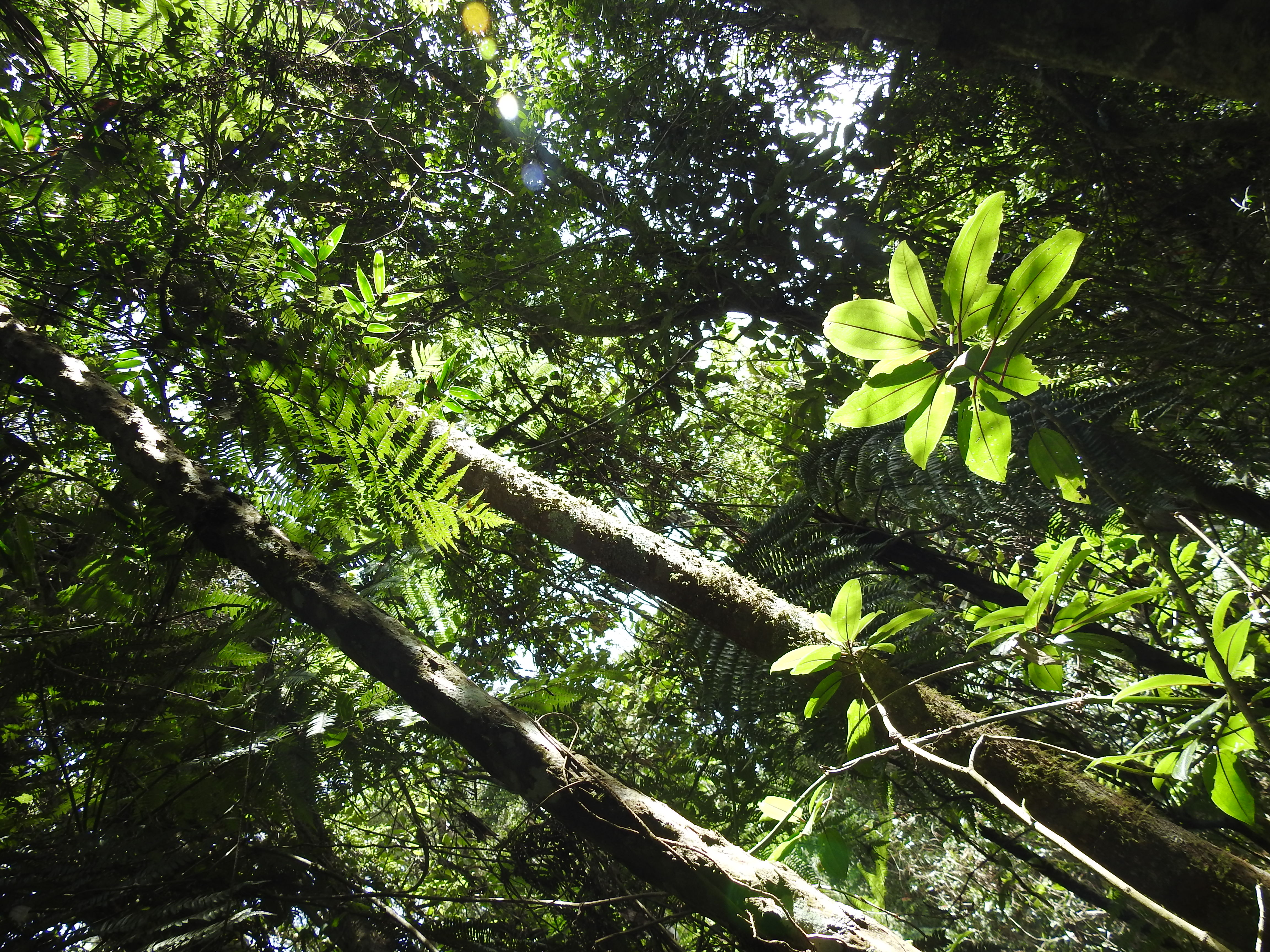 50 Shades of green  im Regenwald im Ranomafana Nationalpark